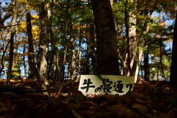 71D_6799.jpg
